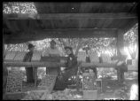 Packing Fruit on C.B. McAlpin ranch 1908