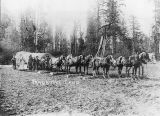 Bradbury's Camp, near Clear Lake, Washington, 1900
