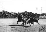 Steer wrestling at the Ellensburg Rodeo