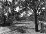 Orchard Tracts, Walnut Drive, 1918 [Grandview, WA]