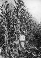 World Champion Corn, grown by S.D. Cornell, 1923 [Grandview, WA]
