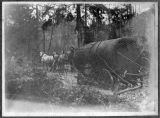 Early Kalama-area logging crew with steam donkey, circa 1899-1909
