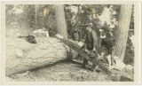 Loggers with early chainsaw