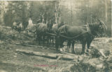 Norman Wilson horse logging, Richardson, 1910