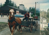 Books are transferred by horse-drawn wagon, Lopez Island Library, 1985