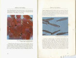 """SALUTE to the SOCKEYE"" booklet"