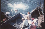 Buff Lapof swimming off reef net boat, 1976