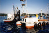 Getting the net ready to fish, Lummi Island, Washington, circa 1996