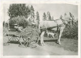 Marian Knight, Rural Free Delivery driver, and horse drawn carriage, Medical Lake, Washington