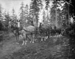 Road building near Dungeness, Washington 1900
