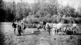 Horse-drawn mowing machine, Forks, Washington