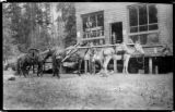 Pack train at Herrick's Store, Clallam county, Washington, 1 of 4
