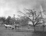 Spraying Mrs Waldrip's orchard, 1914