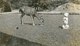Trixie, Buckner Bolton's dog, does her favorite standing up straight trick for the deer at...