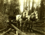 Hauling logs near Columbia Center, Stevens Ridge, Washington, circa 1899