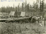 Norm Beam sawmill on Grouse Flat, Asotin County, Washington, circa 1904