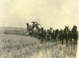 Horse-drawn combine on Grouse Flat, Hunt Spring, Washington, circa 1920-1929