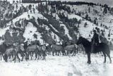 Herding elk, Scoggin Ridge, Washington, March 10, 1913