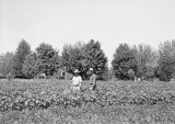 Clore and Singleton in field of edible soybeans, Prosser, Washington, August 12, 1942