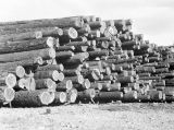 Log pile No. 9 Sawmill, May 30, 1951
