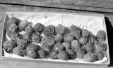 Basket of Strawberries, July 12, 1949