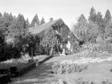 Garden and house, August, 1949