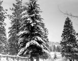 Snow scene near Roslyn cemetary, December 17, 1949
