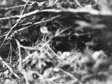 Bird nest, Granite Creek Canyon, 1940