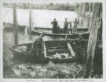 Fish trap off Puget Island, 1893-1913