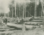 Crown Willamette Paper Company logging site