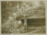 Timber fallers Fretwell & Johns, 1912