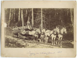 Logging on Whidbey Island, 1887