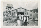 Fish at Haps Resort, Bush Point, Whidbey Island, Washington, circa 1954