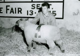 Harvey Schumacher with Grand Champion fat lamb at the 1959 Palouse Empire Fair