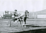 Arena show participant Mrs. Dave McIntosh at the 1960 Palouse Empire Fair