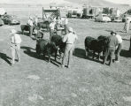 Judging livestock at the 1951 Whitman County Fair