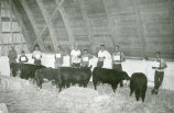 Calf scramble, Palouse Empire Fair, Mockonema, Washington, 1953