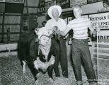 Charles McSweeney and Billy Gilchrist with champion fat steer, Mockonema, Washington, 1957