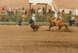 Calf roping at the Palouse Empire Fair rodeo, Mockonema, Washington, 1975