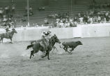 Calf roping at the rodeo, Palouse Empire Fair, Mockonema, Washington, 1967