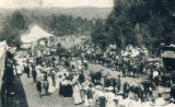 Horse auction in Lyes Grove near Ewartsville, Washington, circa 1900